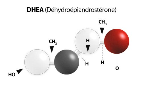 Graphical Representation of DHEA (Dehydroepiandrosterone)